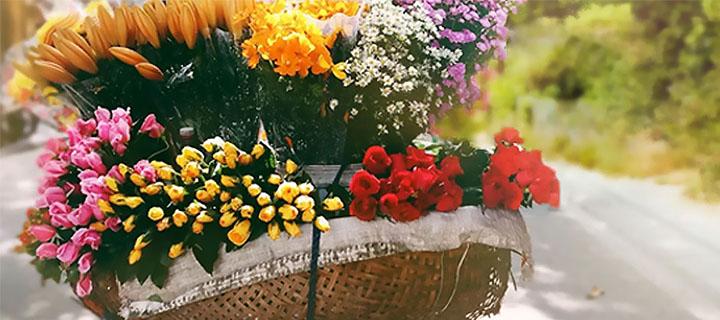 Banner_Nova Flor.jpg