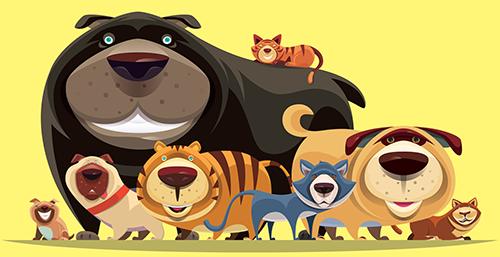 Qual é a diferença entre cachorros e gatos?