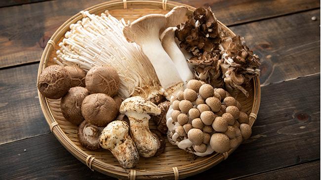 Cogumelos fazem bem à saúde?