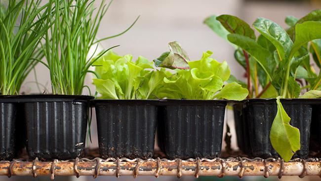 Monte sua horta em casa