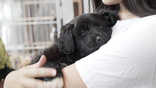 Pets foram adotados durante feira na sede da Sodexo