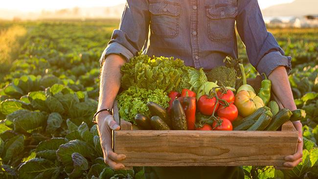 compre legumes e verduras da estação e economize!